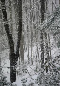 Spring18 Snow I